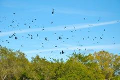 Himmel gefüllt mit Krähen lizenzfreie stockfotos