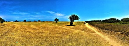 Himmel, gräs och strand royaltyfri bild