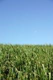 Himmel-Gras stockbilder