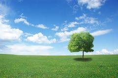 Himmel, Gras und Baum Stockbilder