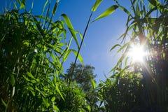 Himmel, Gras und die Sonne Lizenzfreies Stockfoto
