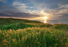 Himmel, hav och grönt gräs Royaltyfria Bilder