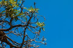 Himmel hinter dem Baum Lizenzfreie Stockfotos