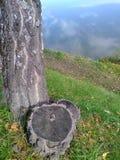 Himmel i vattnet och björken Royaltyfri Bild
