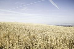 Himmel i vetefält Royaltyfri Foto