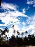 Himmel im Dschungel stockbilder