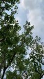 Himmel mit den Bäumen, die zusammen träumen stock video