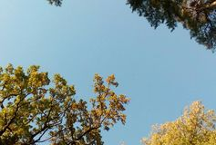 Himmel mit den Oberteilen Stockfoto