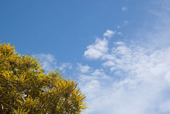 Himmel mit gelbem Baum Lizenzfreies Stockfoto