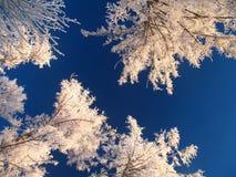 Himmel mit vergletscherten Bäumen Stockfotografie