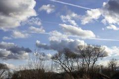 Himmel mit Wolken über Baumstämmen Stockbild