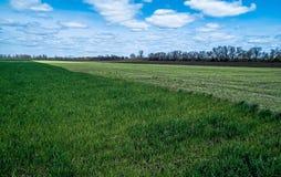 Himmel mit Wolken über Grün- und Schwarzfeldern Lizenzfreie Stockfotos