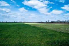 Himmel mit Wolken über Grün- und Schwarzfeldern Stockfotografie