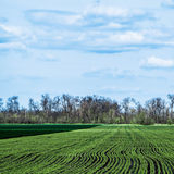 Himmel mit Wolken über grünen Feldern Lizenzfreie Stockbilder