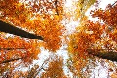Himmel mit Wolken und Sonnenschein durch den Herbst tr Stockfoto