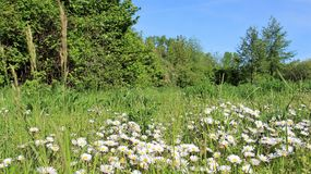 Himmel natur, blomma, solljus, arass, växt som är bred, blom, sommar, buske, royaltyfria foton