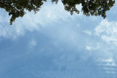 Himmel- och bladbakgrund Royaltyfri Foto