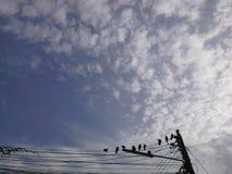 Himmel och fåglar på tråd Royaltyfria Foton