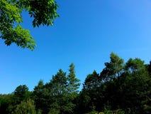 Himmel och filialer av träd Royaltyfri Fotografi