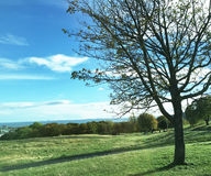 Himmel och grässlättar Royaltyfria Bilder