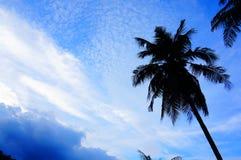 himmel och kokospalm Fotografering för Bildbyråer