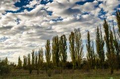 Himmel och poppel Arkivfoto