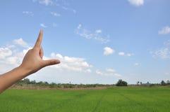 Himmel och ris Arkivfoto