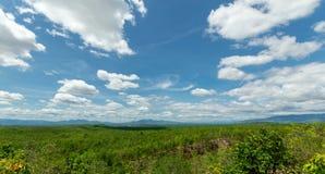 Himmel och skog Arkivbilder