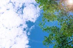 Himmel och träd Royaltyfri Fotografi