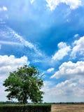 Himmel och träd Royaltyfri Bild
