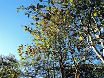 Himmel och träd i hösten Arkivbilder