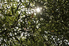 Himmel till och med träd Arkivbilder