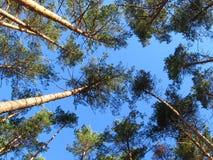 Himmel u. Bäume Stockbild