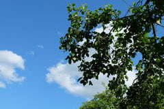 Himmel u. Baum Lizenzfreies Stockfoto