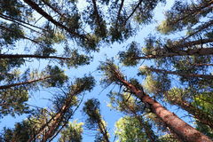 Himmel und Bäume Stockfotos