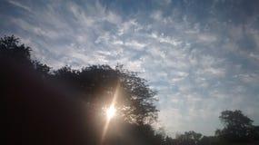 Himmel und Bäume Stockfoto