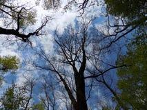 Himmel und Bäume Lizenzfreies Stockfoto