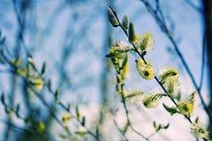 Himmel und Bäume Lizenzfreie Stockfotos