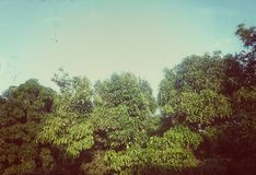 Himmel und Bäume Lizenzfreies Stockbild