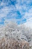 Himmel und Bäume zur Winterzeit Lizenzfreie Stockfotografie