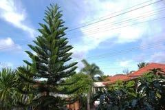 Himmel und Baum Stockfoto