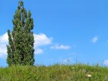 Himmel und Baum Stockbild