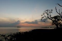 Himmel und Baum Stockfotografie