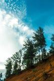 Himmel und Baum lizenzfreie stockfotografie