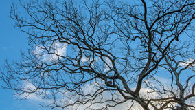 Himmel und Baum im Sonnenuntergang Lizenzfreie Stockfotografie