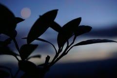 Himmel und Blätter lizenzfreie stockfotos