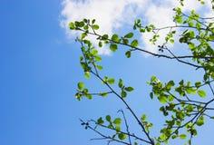 Himmel und Blätter Junge Erwachsene stockbilder