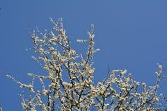 Himmel und Blüte Lizenzfreie Stockfotos