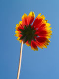 Himmel und Blume Stockfoto