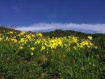 Himmel und Blume Stockbild